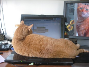 Ginger tabby (large) lying on my laptop keyboard.
