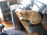 Ginger cat on laptop keyboard.