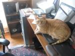 cat lying on computer
