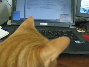 Frankie orange tabby on lap with head in the way of the monitor